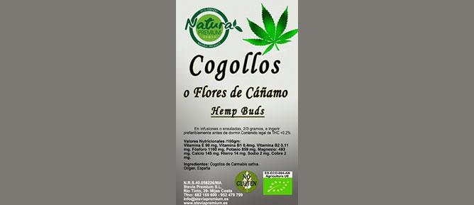 COGOLLOS / FLORES DE CAÑAMO